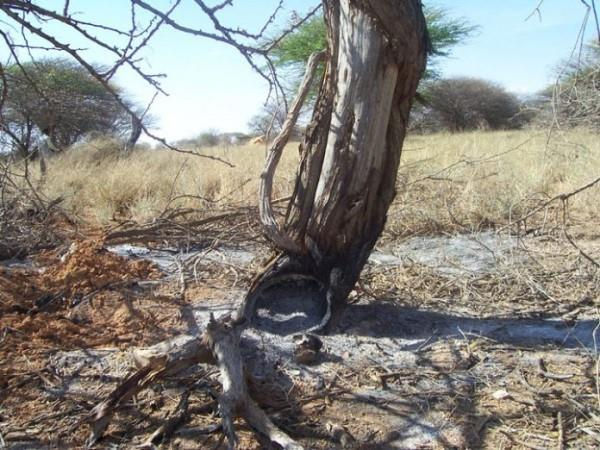 Somaliland: 25% of Residents Displaced by Charcoal Burning