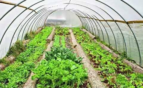 Somaliland: Are We Turning A Blind Eye To Greenhouse Vegetable Production  Technology?