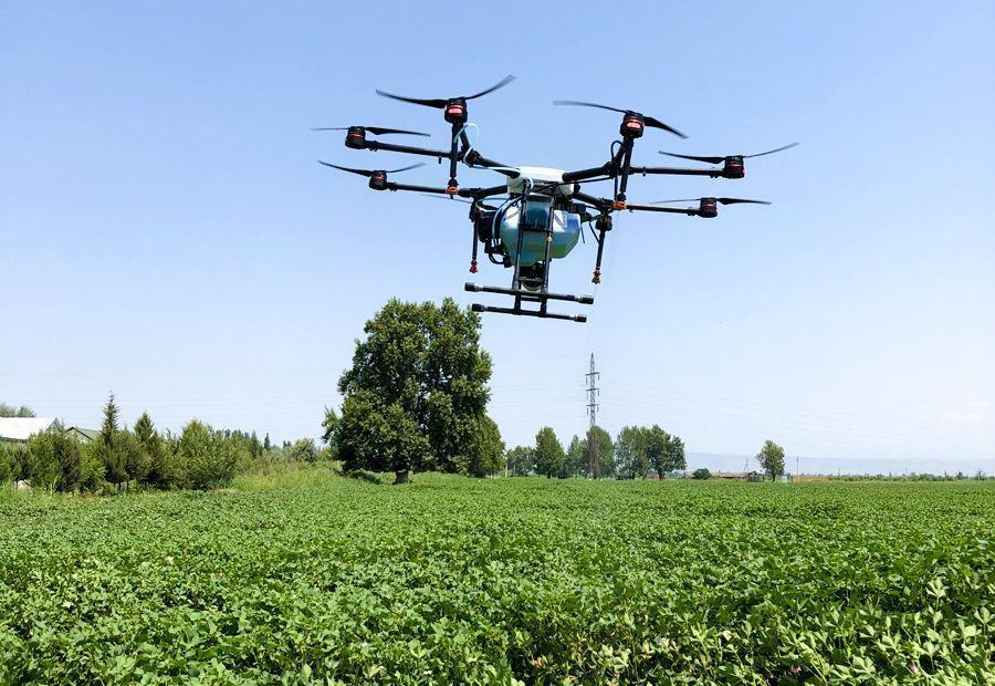 Drone used for spraying pesticides on cotton field in