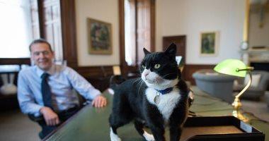 نتيجة بحث الصور عن رئيس مكافحة الفئران يعود للخدمة في السفارة البريطانية