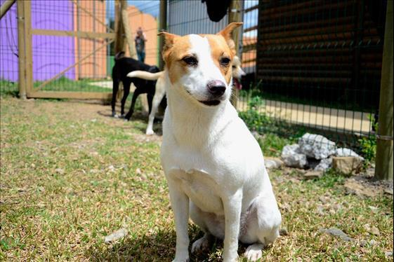 Young Costa Rican Dedicates To Rescue Dogs In Abandonment Condition Menafn Com