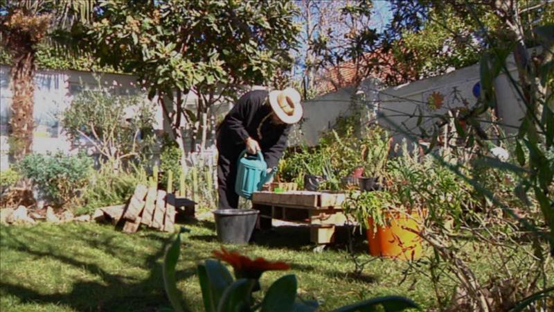 Build A Beautiful Medicinal Garden In Our Homes Menafn Com