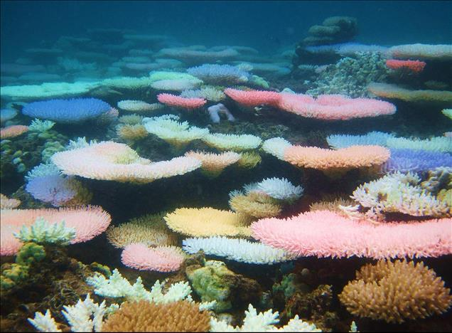 Coral reefs that glow bright neon during bleaching offer hope for recovery new study - MENAFN.COM